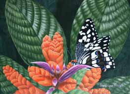 Photo de papilio demodocus